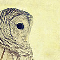 Lovely Lucy Barred Owl by Stephanie McDowell