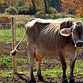 Low Cow by LeeAnn McLaneGoetz McLaneGoetzStudioLLCcom