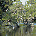 Lowcountry Landscape by Suzanne Gaff