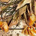 Lubeck Flowers Left Behind by KG Thienemann