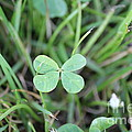 Luck To All by Scenesational Photos