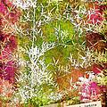 Lucky Bamboo by Judi Bagwell