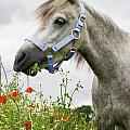 Lulu In The Poppy Field by Angela Doelling AD DESIGN Photo and PhotoArt