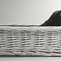 Lurking In The Basket by Bernadette Kazmarski