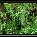Lush Green Landscape by Carolyn Marshall