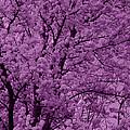 Lush Lavender by Edward Smith