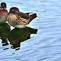 Ma And Pa Wood Duck by Edward Peterson