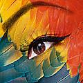 Macaw by Yosi Cupano