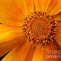Macro Flower by Smilin Eyes  Treasures
