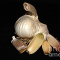 Macro Garlic by David Bearden