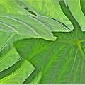 Macro Leaf Structure by Debra     Vatalaro