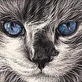 Mad Cat by Elena Kolotusha
