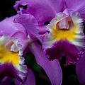 Maddie's Orchid by Trish Tritz