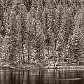 Madison River Yellowstone Bw by Steve Gadomski