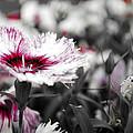 Magenta Flower by Sumit Mehndiratta