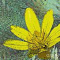 Magic Fern Flower 02 by Ausra Huntington nee Paulauskaite