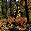 Magic Forest  by Saija  Lehtonen