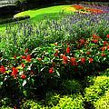 Magic Kingdom Garden by Joan  Minchak