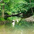 Magic Pond by Douglas Barnett