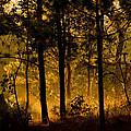 Magic Shadow Of Tree by Tom Sak