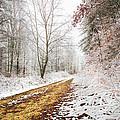 Magic Trail by Debra and Dave Vanderlaan