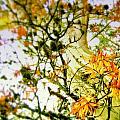 Magic Tree by HweeYen Ong