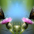 Magical Butterflies by Jenny Gandert