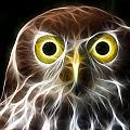 Magical Owl by Paul Van Scott