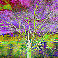 Magical Tree 4 by Sheila Kay McIntyre