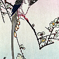 Magpie, 19th Century by Granger