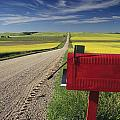 Mailbox On Country Road, Tiger Hills by Dave Reede