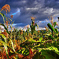 Maiz by Skip Hunt