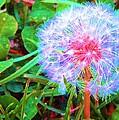 Make A Wish by Susan Carella