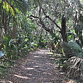 Mala Compra Trail by Tiffney Heaning