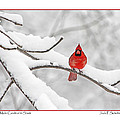 Male Cardinal In Snow by Jack Schultz