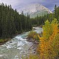 Maligne River by Tony Beck