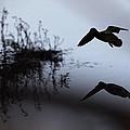 Mallard - Duck - Near The Tombigbee by Travis Truelove