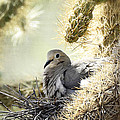 Mama Dove by Saija  Lehtonen