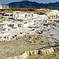Mammoth Hot Springs Terraces by Jon Berghoff