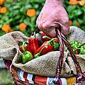 Man Bringing A Basket Of Red And Green Peperoni by Roberto Giobbi