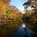 Manatee Springs by Tim Litwiller