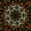 Mandala 111511 by David Lane