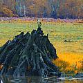Mangrove Lookout by Douglas Barnard