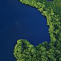 Mangrove Rhizophoraceae Stand, Bocas by Christian Ziegler