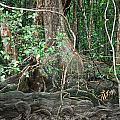Mangroves by Carole Hinding