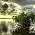 Mangroves I by Bruce Bain
