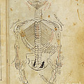 Mansurs Anatomy, Skeletal System, 15th by Science Source