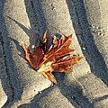 Maple Leaf Forever by Marilyn Wilson