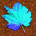 Maple Leaf On Pavement by Marie Jamieson