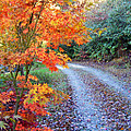 Maple Road by Duane McCullough